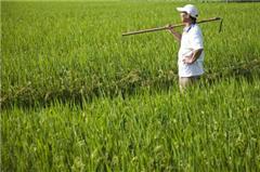 生物技术创新助力农业可持续发展